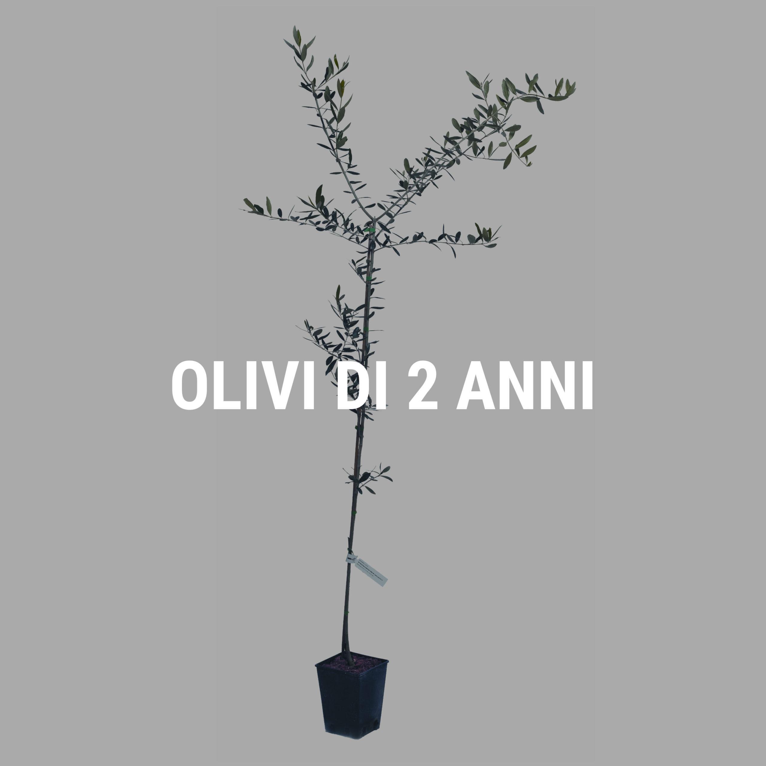 http://www.spoolivi.com/wp-content/uploads/2021/03/olivi_2_anni-2-scaled.jpg