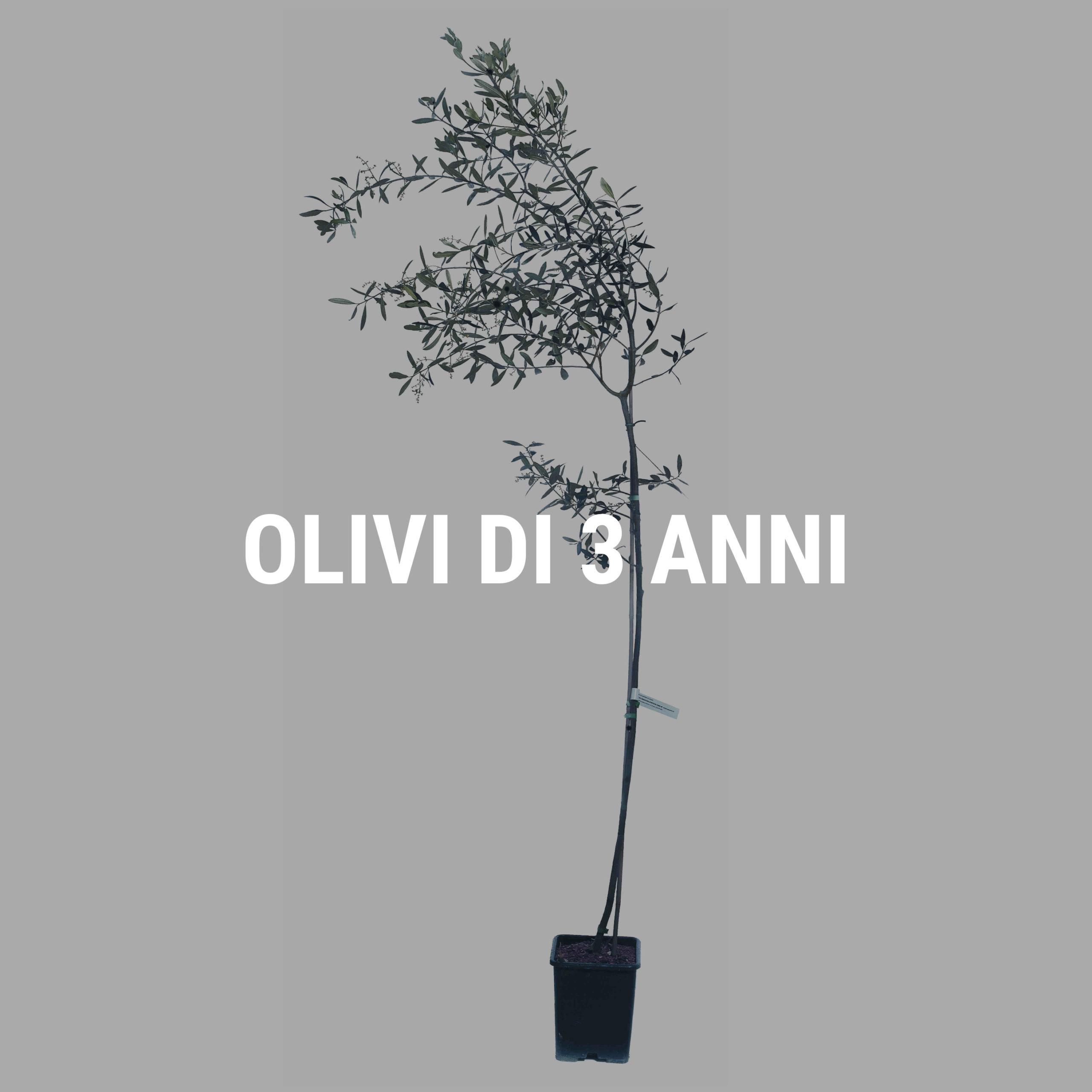 http://www.spoolivi.com/wp-content/uploads/2021/03/olivi_3_anni-2-scaled.jpg