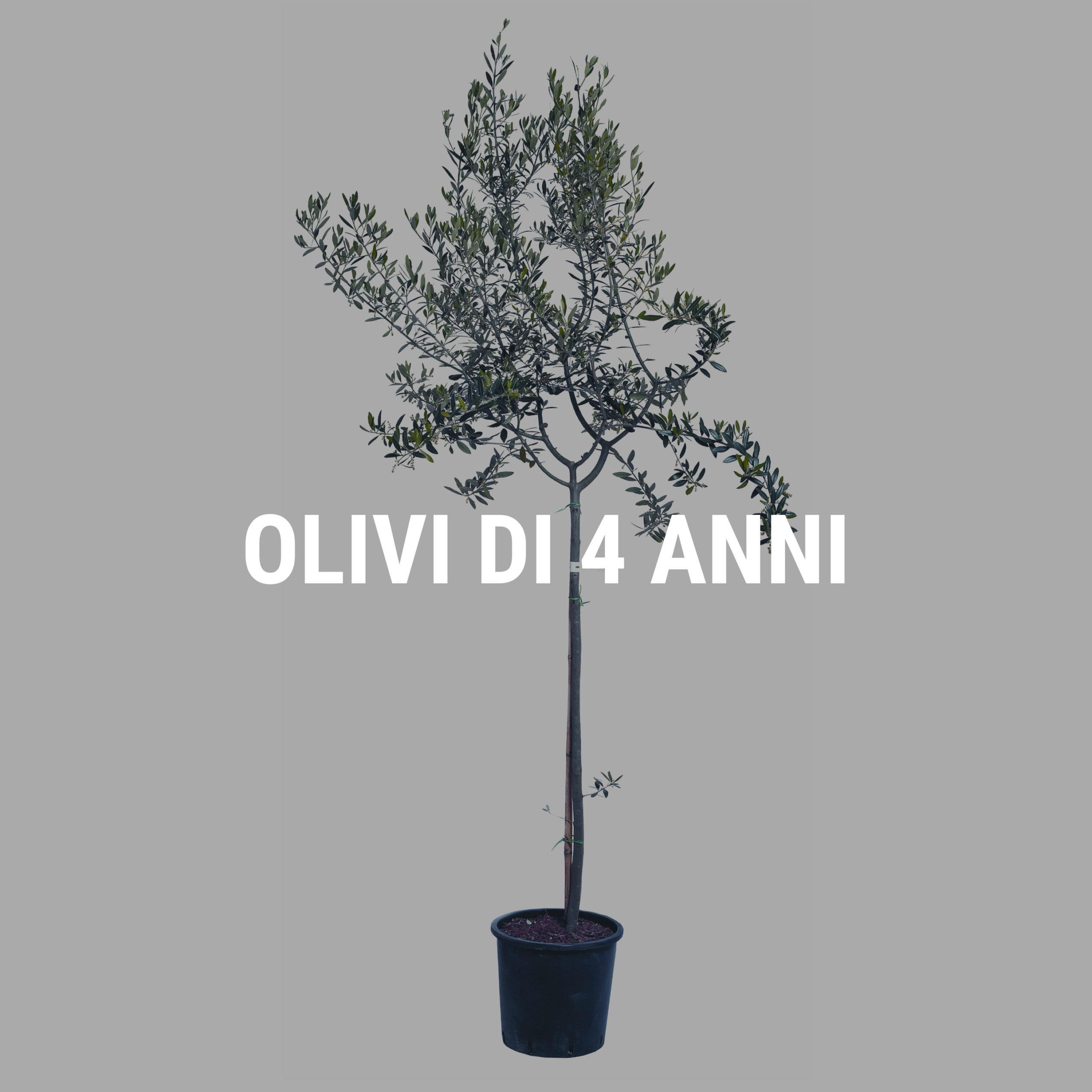 http://www.spoolivi.com/wp-content/uploads/2021/03/olivi_4_anni-2-scaled.jpg